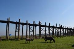 Мост u Bein в Amarapura, Мандалае, Мьянме Стоковое Фото