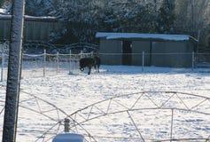 Мотивы зимы страуса и снега Стоковое Изображение