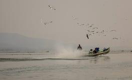Моторка с птицами на озере в инкрустации, Мьянме Стоковое фото RF