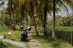 Мотоцилк припарковано на террасе риса bali Индонесия стоковая фотография