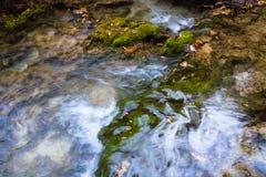 Мох болота Стоковая Фотография
