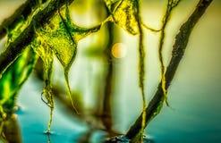 Мох воды на ветви Стоковая Фотография