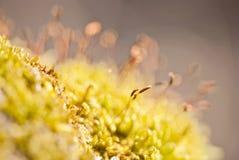 Мох в лесе Стоковое Фото