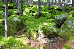 Мох в лесе Стоковые Изображения