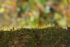 Мох в ярком солнечном свете Стоковое Фото