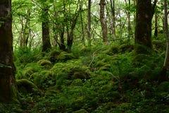 Мох, древесина Bastow, Conistone, Wharfedale, участки земли Йоркшира, Англия стоковое изображение rf