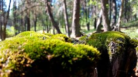 Мох дерева стоковое фото rf