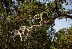 Мох дерева Стоковые Фотографии RF