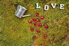 Мох леса с чонсервной банкой и сердцами стоковое изображение