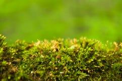 Мох леса Стоковая Фотография