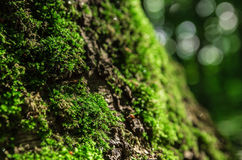 Мох леса Стоковые Фотографии RF