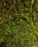 Мох леса Стоковое Изображение