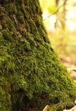 Мох леса Стоковые Фото