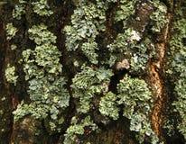 Мох леса Стоковое фото RF