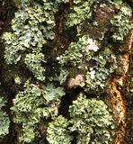 Мох леса Стоковая Фотография RF