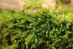 Мох леса Стоковые Изображения