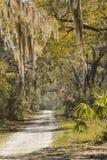 Мох задрапировал деревья на охраняемой природной территории шеи Херриса национальной, Georg Стоковые Изображения
