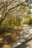 Мох задрапировал деревья на охраняемой природной территории шеи Херриса национальной, Georg Стоковое Фото