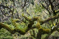 Мох и ветви Стоковые Изображения RF