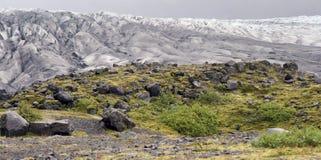 Мох и лед Стоковые Изображения
