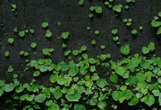 Мох и зеленая предпосылка лист Стоковое фото RF