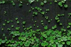 Мох и зеленая предпосылка лист Стоковые Фото