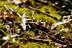 Мох и листья стоковое изображение rf