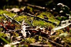 Мох и листья стоковые изображения
