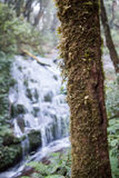 Мох и папоротник в лесе Стоковая Фотография