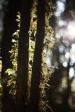 Мох и папоротник в лесе Стоковое Изображение