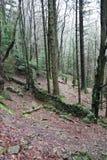 Мох каменной стены леса деревьев стоковое изображение