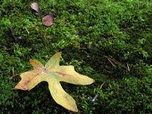 мох листьев Стоковые Фото