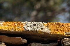 мох макроса Стоковое фото RF
