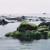 Мох моря как прилив проползает внутри Стоковое Изображение RF