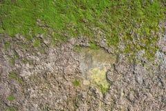 Мох на бетонной стене Стоковое Изображение RF