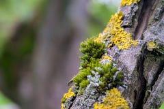 Мох на ветви дерева стоковое изображение rf