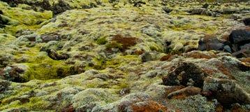 Мох на вулканических породах в Исландии Стоковые Изображения RF