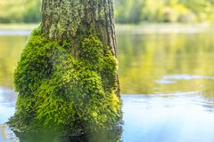 Мох на дереве в пруде на винограднике Марта, МАМАХ стоковые фото