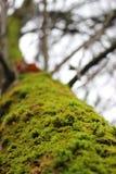 Мох на дереве при запачканная предпосылка Стоковое Изображение RF