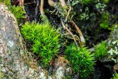 Мох на дереве Стоковое Изображение