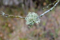 Мох на дереве Стоковые Фотографии RF