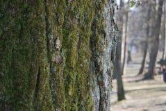 Мох на дереве thre стоковые фотографии rf