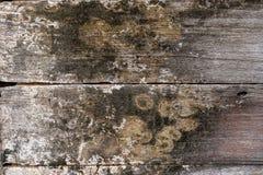 Мох на древесине Стоковое Фото