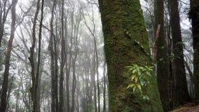 Мох на дереве, лотке Kiew Mae Стоковое Изображение