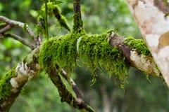 Мох на дереве Стоковое фото RF