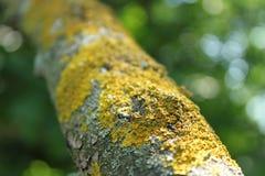 Мох на дереве Стоковое Изображение RF