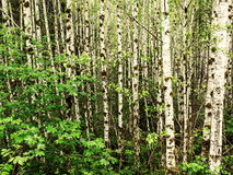 Мох на деревьях ольшаника в тропическом лесе стоковые фотографии rf