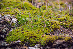 Мох на камне, траве, конце-вверх Стоковое фото RF