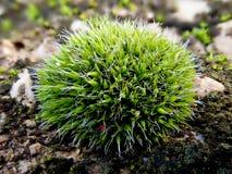 Мох на камне яркого ого-зелен цвета Стоковые Изображения RF