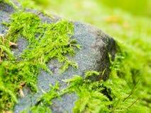 Мох на камне Стоковая Фотография